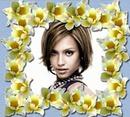 Narcisos Flores