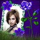 Rosa azul Violetas