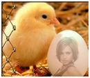 Яйцо и цыпленок
