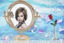 Fleurs Rose Miroir Pétales