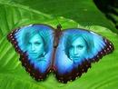 Inlay į drugelį su mėlyna sparnus su tekstu