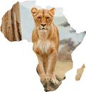 Afrika Şeffaf PNG
