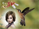 Pássaro mosca Beija-flor
