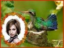 Hummingbird Scene