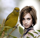 Canary Scene