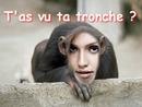 Scimmia Viso