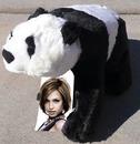Panda pliušas