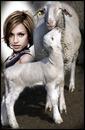 Ewe and lamb Scene