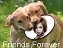 Scene Hundar freesbee Friends forever