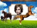 Horse-riding Horses