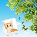 Polaroid Motýli