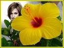 Flore de Hibisco amarela