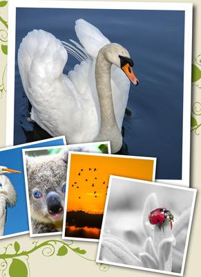 Naturaleza Collage 5 Fotos