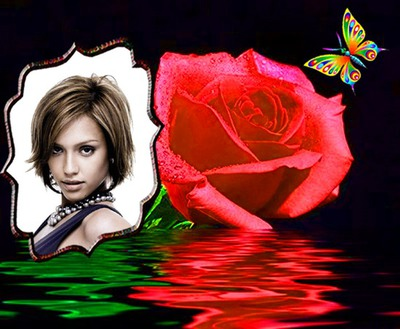Rosa y mariposa