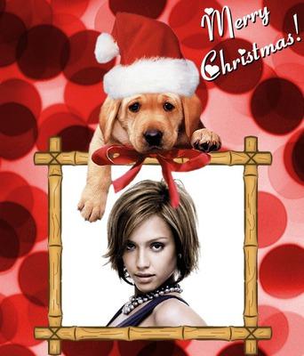 Buon Natale Buon Natale Cucciolo