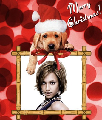 Cachorro Merry Christmas Feliz Navidad