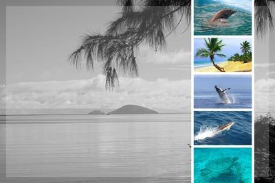 Collage de 6 fotos Blanco y Negro y Color