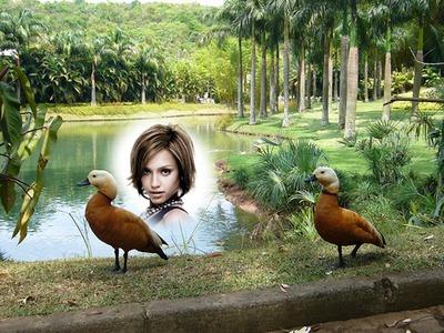 Escena Patos en un parque