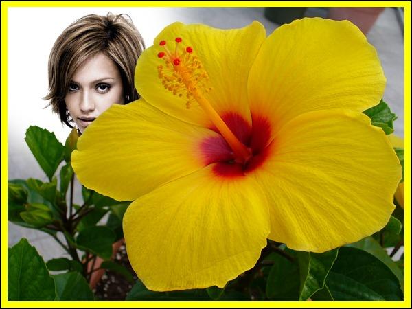 montage photo fleur d 39 hibiscus jaune pixiz. Black Bedroom Furniture Sets. Home Design Ideas