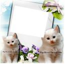 1 photo avec chats blancs