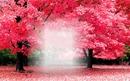 Sueños en rosa