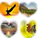 collage de Corazones