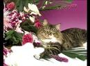 Открытка с котом и цветами 150
