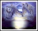 loups amoureux