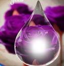 rosa en gota de cristal