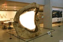 bouche de requin
