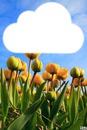 Nuage au-dessus des tulipes jaunes