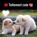 tellement cute