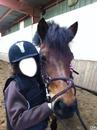 L'amours pour les chevaux