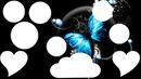 papillon 9 photo