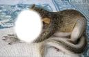 visage de l'ecureuil