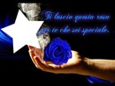 rosa blu'