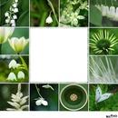 cadre vert avec fleurs