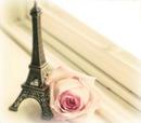 Paris avec rose