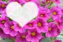 corazon en petunia