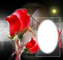 Cadre de Rose