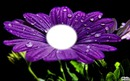 le coeur d'une fleurs