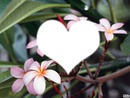 amour en fleur