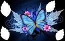 papillon avec 3 fleurs 4 photos