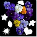 Flores y más cosas