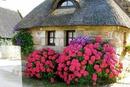 casa e flores