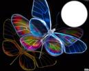 papillons néon