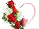 rosa e coração