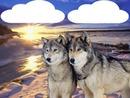 couple loup dans la neige 2 photos