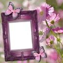 cadre fleurs papillon