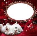 un chaton blanc 1 photo